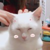 sin30°☆→以沫